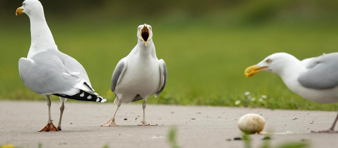 seagull-theft-protection
